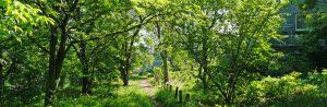 殿山市民の森風景