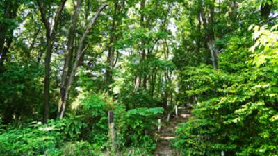 つくし野殿山市民の森10