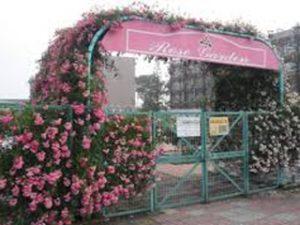 日大薔薇園風景1