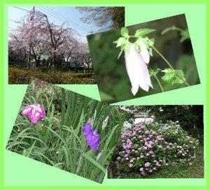 殿山の花々