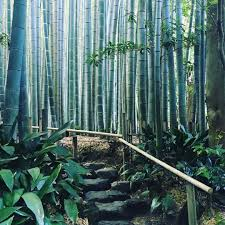 竹寺の写真