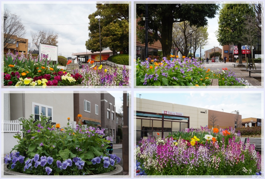 つくし野駅前の花壇